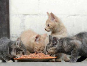 Animal Hoarding: profilo del disturbo