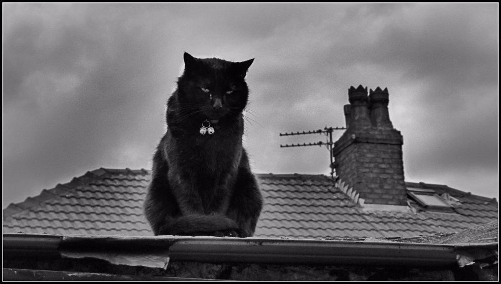 Un gatto sul tetto. Se è caduto una volta potrebbe cadere di nuovo