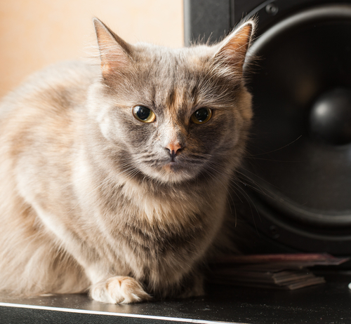 Musica per i gatti