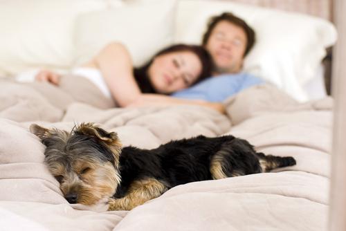 Il cucciolo a letto con noi?