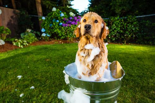 bagno cane