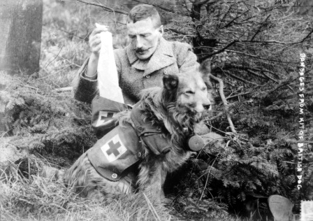 Grande Guerra, mostra animali