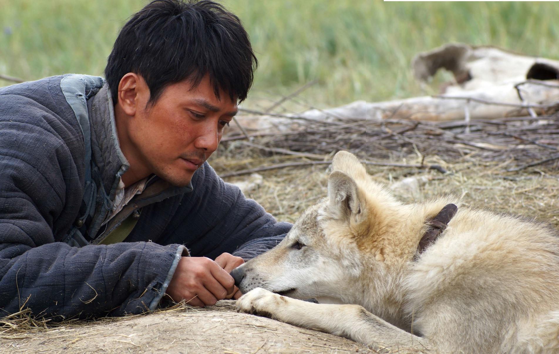 lupi nel mondo