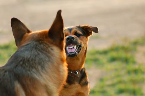 Esperti comportamento cane nervoso