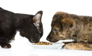 alimentazione cane gatto