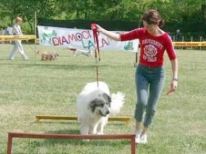 sfilata Parco Forlanini cercocasa2_bosch2003