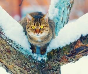 L'alimentazione in inverno