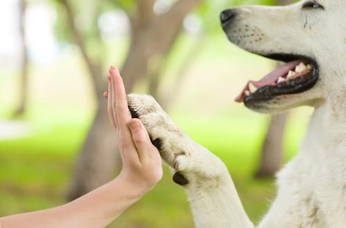 Il cane ci aiuta