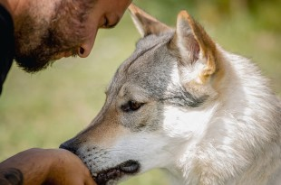 Incontrare un lupo