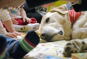 Pet Therapy Lucky