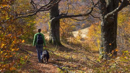 Una passeggiata pet-friendly tra gli ulivi