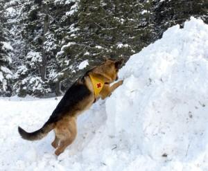 Altruismo nel cane