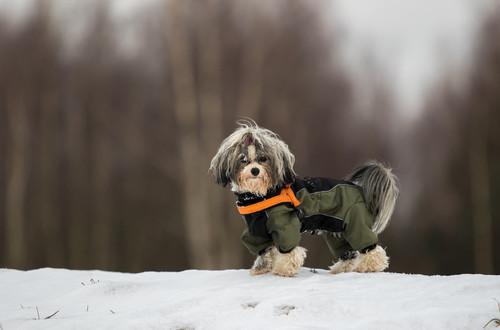Freddo scegliamo il cappottino