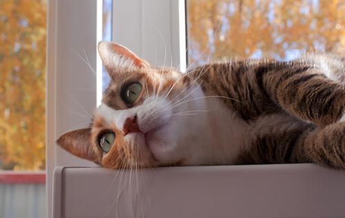Cinque modi per avere un gatto felice