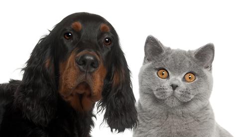 Cane o gatto