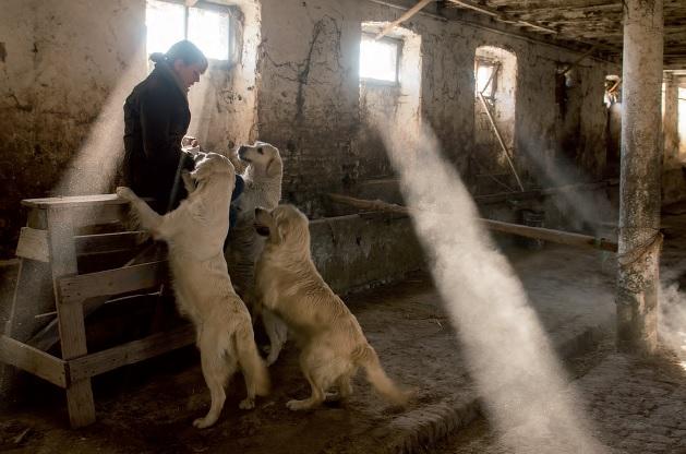 Castello cani