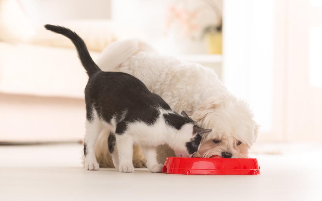 Crocchette per cani e gatti