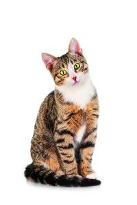 Crocchette per cani di taglia piccola e gatti