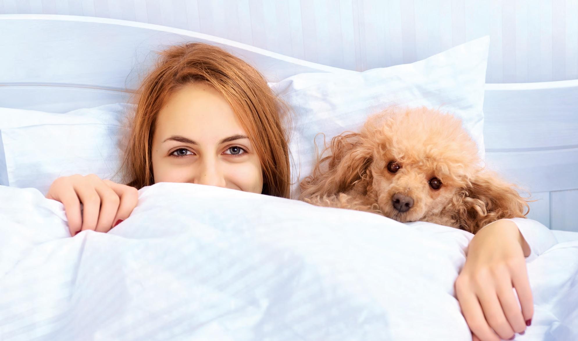 Sul letto con fido si pu quattro zampe - Letto benessere ...