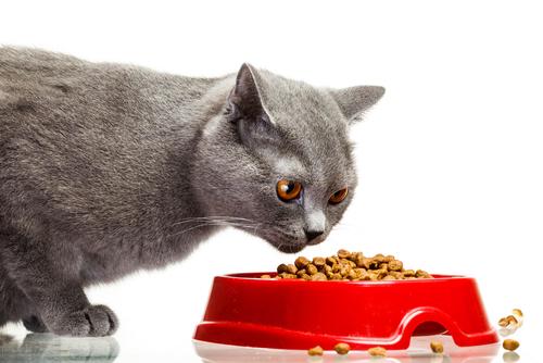 ciotola per gatti
