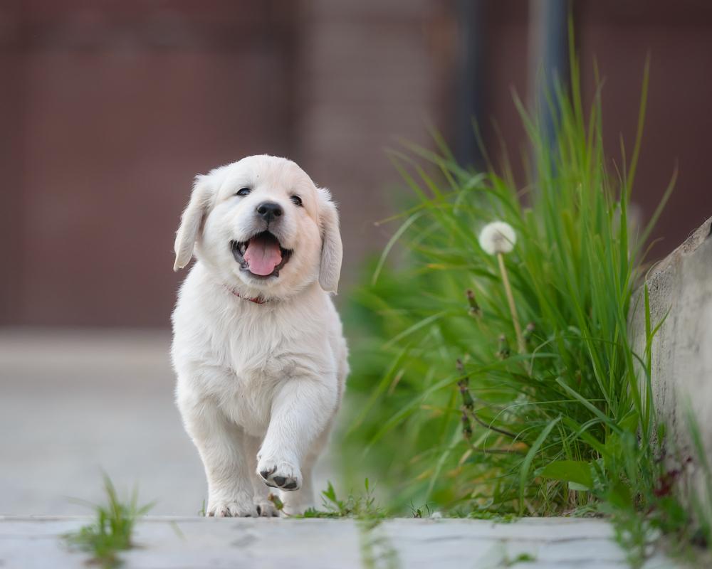 Cucciolo felice