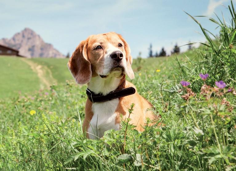 Beagle Day