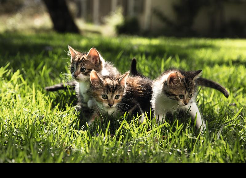 Cani abbandonati e gatti bisognosi
