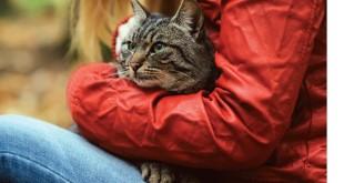 Gatti da adottare