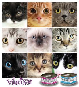 Cibo per cani e gatti l importanza di scegliere bene for Miglior cibo per gatti