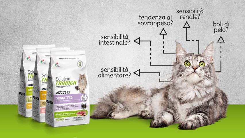Cibo per gatti scegli in base alle sue esigenze quattro for Miglior cibo per gatti