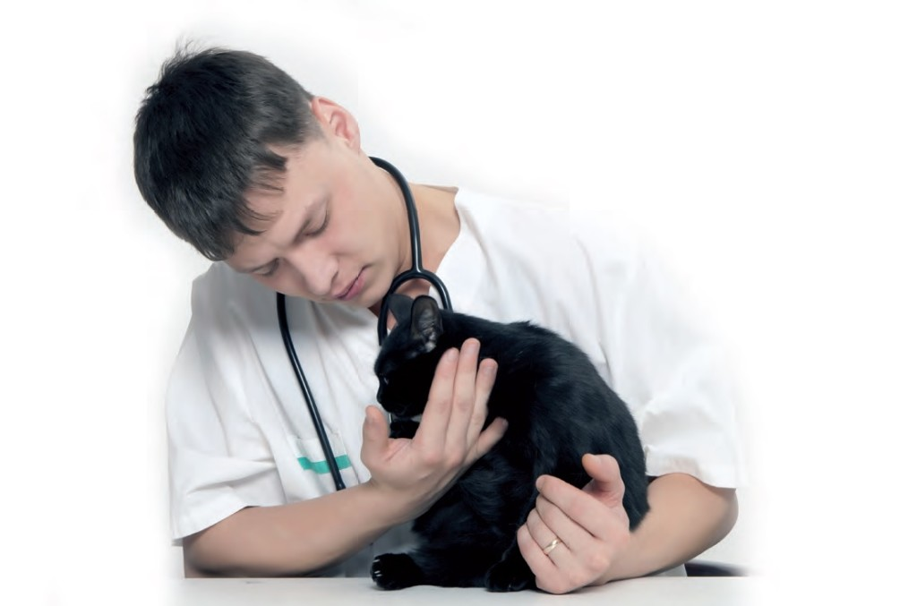 Tiroide problemi nel gatto