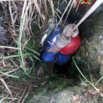 Cane salvato da una grotta