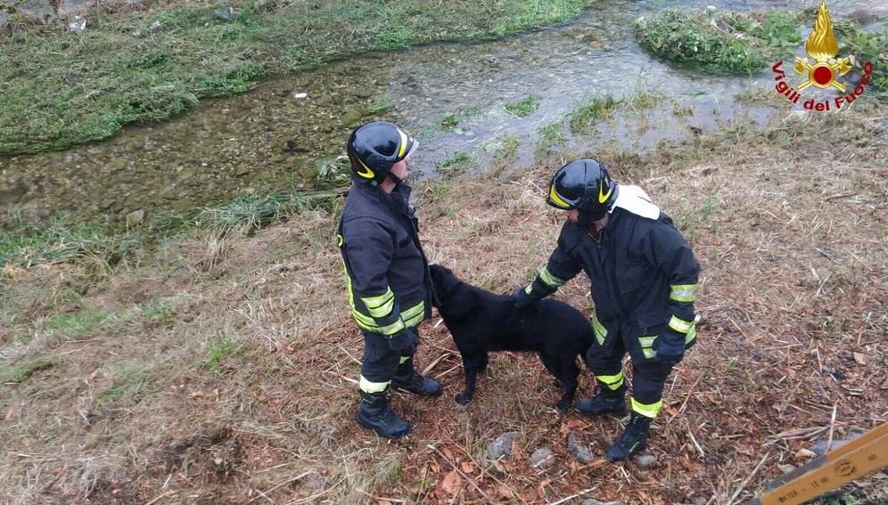 Salvano il cane
