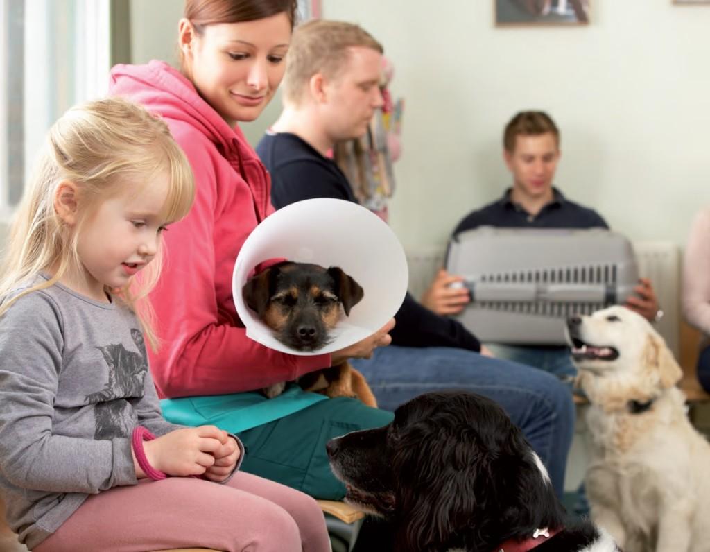 Detrarre le spese veterinarie