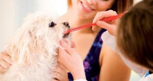 Igiene del cane