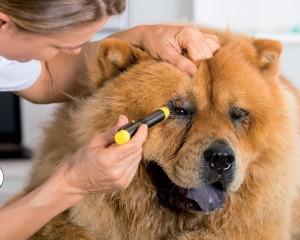 Igiene-del-cane (3)