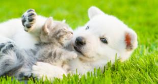 Il gioco nei cuccioli