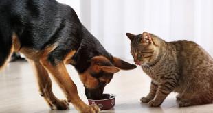 Cibo-per-gatti (2)