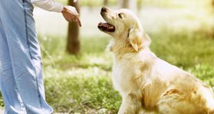 Educare il cane