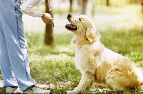 educare il cane una forma di amore quattro zampe