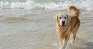 Vacanza-con-il-cane