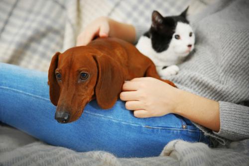 Vivere con un cane o un gatto