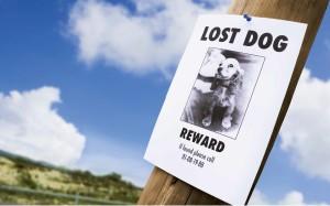 cane-rapito (2)