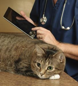 gatto-che-soffre-d'ansia (1)