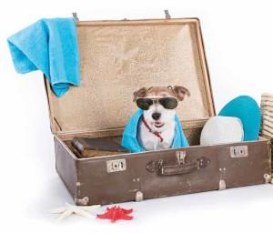 vacanze-pet-friendly