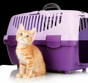 vacanze pet-friendly