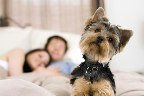 Cane nel letto