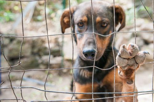 Cani da adottare