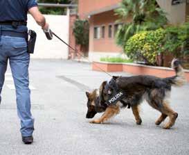 Cani poliziotto