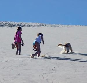 Il cane in spiaggia